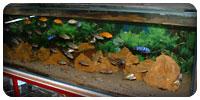 Entretien d'aquarium