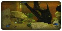 Un aquarium de 800 litres