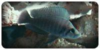 Un aquarium Tanganyika de 120 Litres