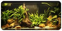 Un aquarium Victoria de 120 Litres