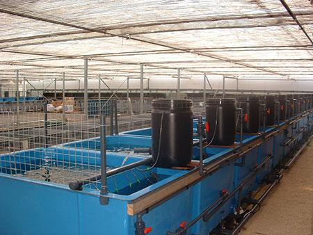 petite sortie aquariophile aux pays bas eau douce divers aquarium webzine l 39 aquariophilie. Black Bedroom Furniture Sets. Home Design Ideas