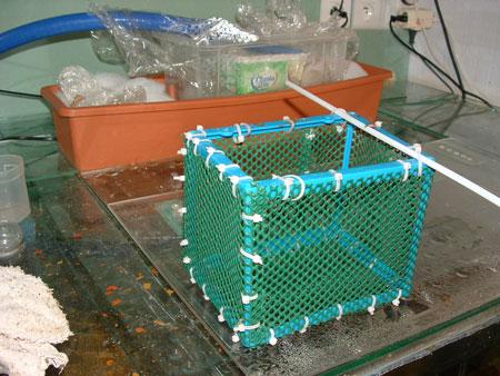 des isoloirs maisons eau douce divers aquarium webzine l 39 aquariophilie d 39 eau douce et d. Black Bedroom Furniture Sets. Home Design Ideas