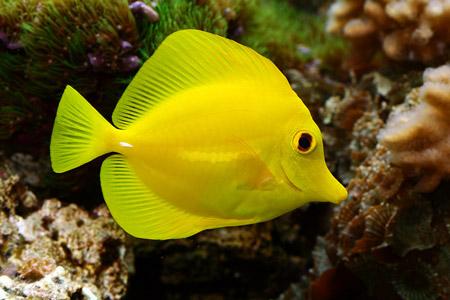 poissons d 39 aquarium le blog de eduma. Black Bedroom Furniture Sets. Home Design Ideas