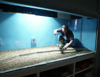 Un bac de 4000 litres eau douce divers aquarium for Acoiriome de poisson