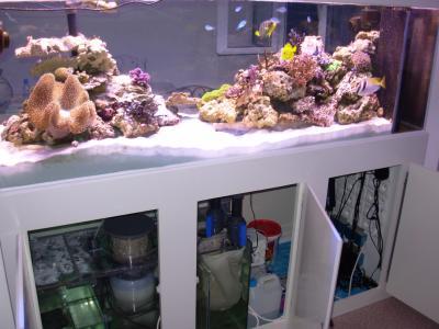 Meuble aquarium pas cher montr al for Aquarium meuble pas cher