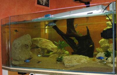 un aquarium de 800 litres eau douce afrique lac malawi aquarium webzine l 39 aquariophilie d. Black Bedroom Furniture Sets. Home Design Ideas